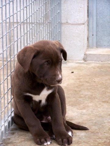 cachorro-en-la-perrera. Foto CHA Zaragoza